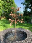 Medium Copper Acer Tree Water Feature